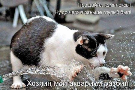1416372009_kotomatritsa_5 (450x300, 107Kb)
