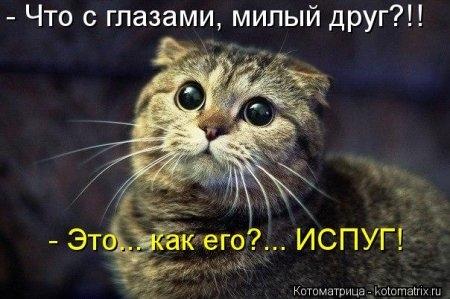 1416372036_kotomatritsa_t6 (450x299, 93Kb)