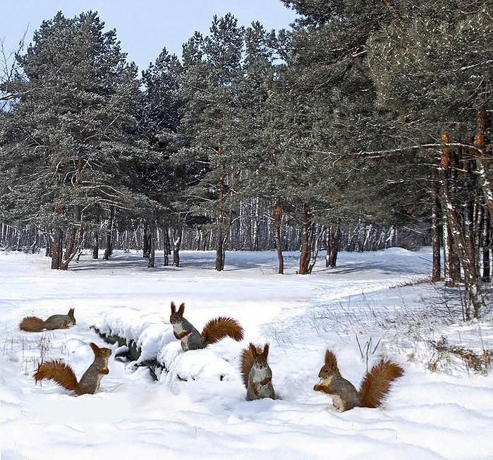 Картинки мечтаю о красавице зиме