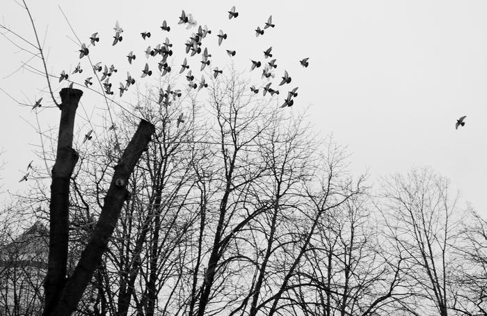 птицы дерево (700x454, 187Kb)