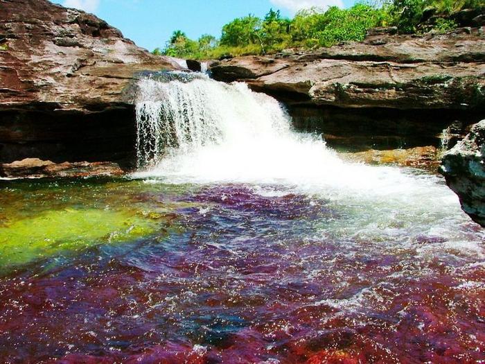 Каньо Кристалес - самая красивая река в мире6 (700x525, 490Kb)