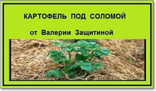 5177462_Image191_5 (530x310, 207Kb)