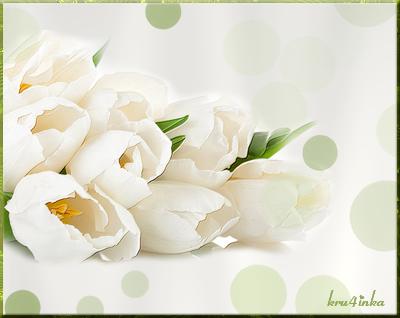 Белые-тюльпаны (400x318, 153Kb)
