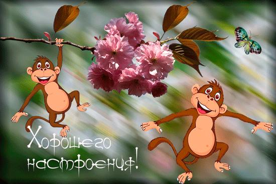 Картинки с обезьянками с добрым утром