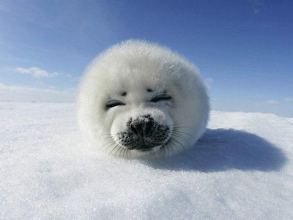скачать морские котики торрент - фото 5