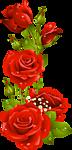 роза6 (72x150, 19Kb)