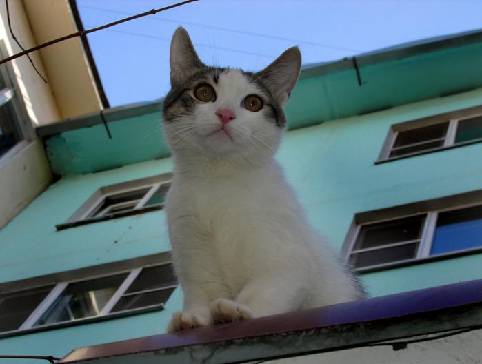 котёнок Изя смотрит на мир/683232_izya_na_krishe800 (700x528, 167Kb)