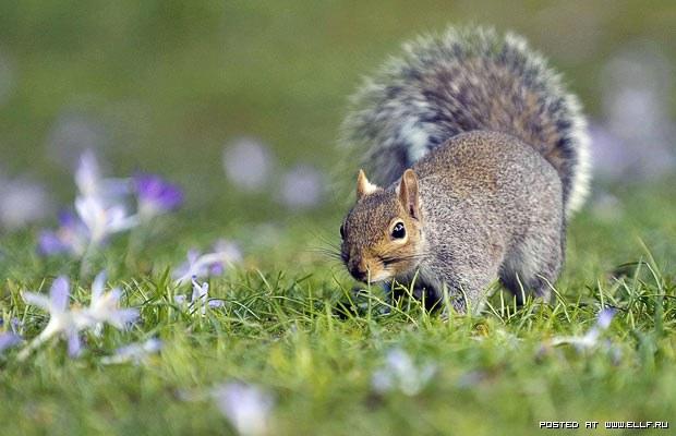 1268772390_squirrel-spring_1597641i (620x400, 57Kb)