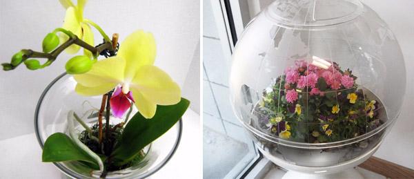 florarium-svoimi-rukami-2627 (600x259, 130Kb)