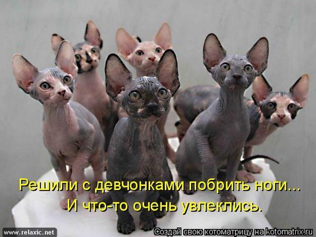 kotomatrix_0522 (640x480, 212Kb)