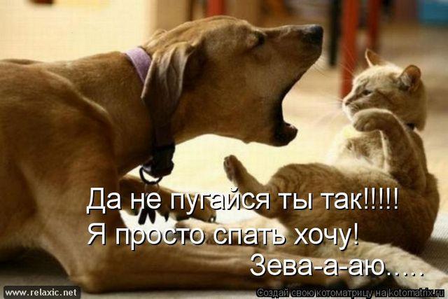 kotomatrix_0562 (640x427, 207Kb)