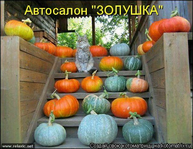kotomatrix_0602 (640x496, 322Kb)