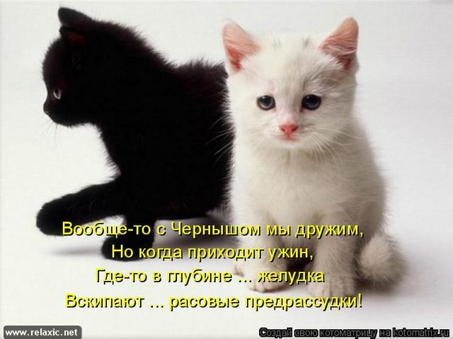 kotomatrix_0682 (640x479, 177Kb)