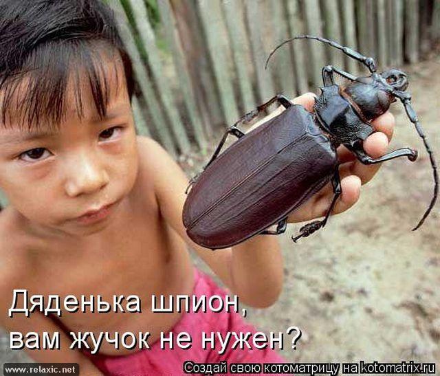 kotomatrix_0742 (640x547, 291Kb)