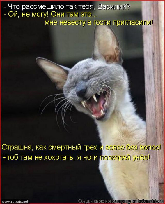 kotomatrix_0892 (567x700, 321Kb)