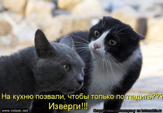 kotomatrix_1171 (640x445, 191Kb)