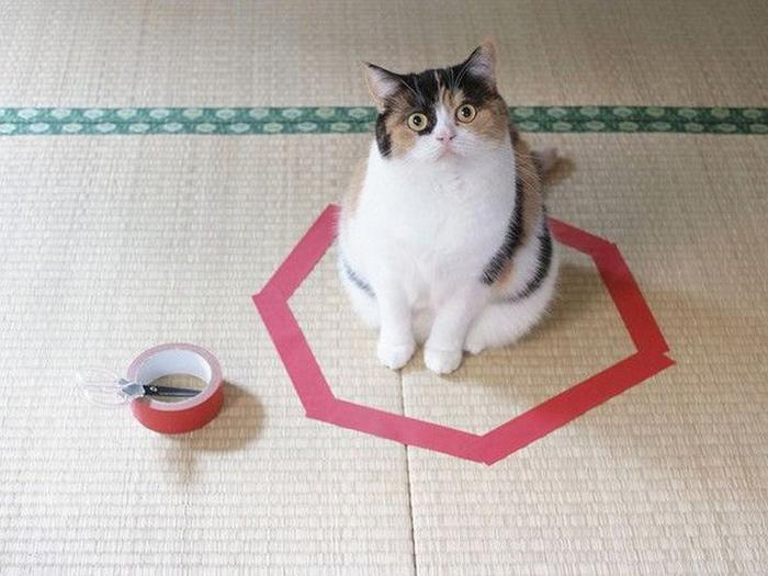 смешные фото кошек 2 (700x525, 286Kb)
