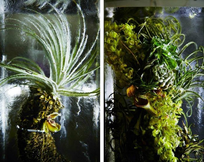 iced-flowers-makoto-azuma-81 (700x555, 168Kb)