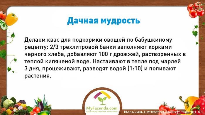 3863677_dachnaya_mydrost1 (700x392, 150Kb)