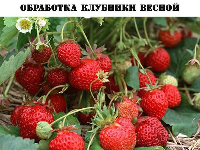 3560462_getImage_1 (700x525, 139Kb)