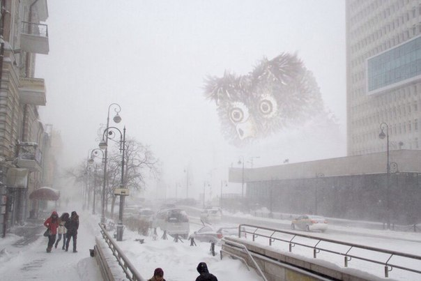 котик в тумане (604x403, 38Kb)