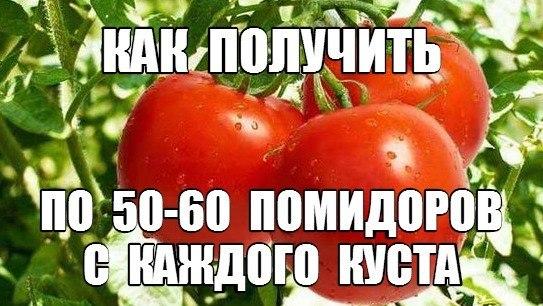 4248238_23 (543x306, 61Kb)