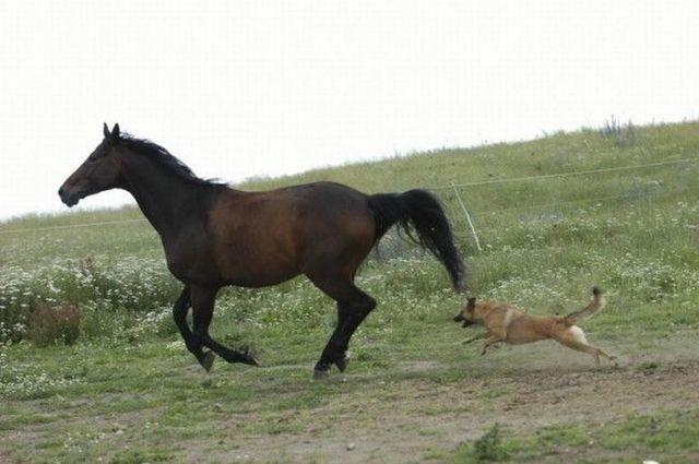horse_01 (640x425, 97Kb)