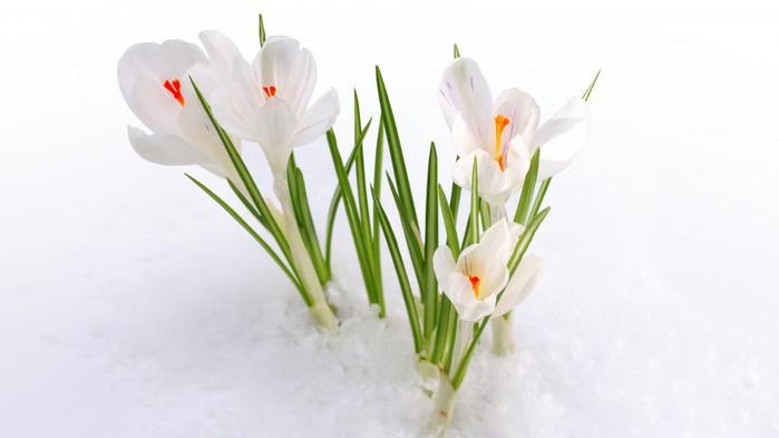 цветочная весна 7 (699x393, 119Kb)