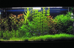 5835628_aquarium_naturalist_if_ua300x196 (300x196, 24Kb)