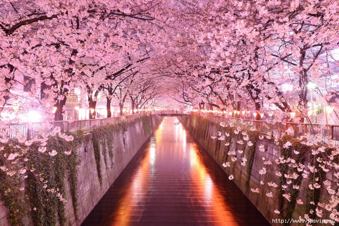 5745884_Tonnel_iz_sakyri_Yaponiya (700x466, 361Kb)