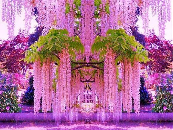 Kawachi_Fuji_Garden5 (580x435, 128Kb)