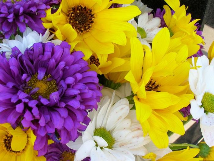 Фиолетовые цветы с желтым