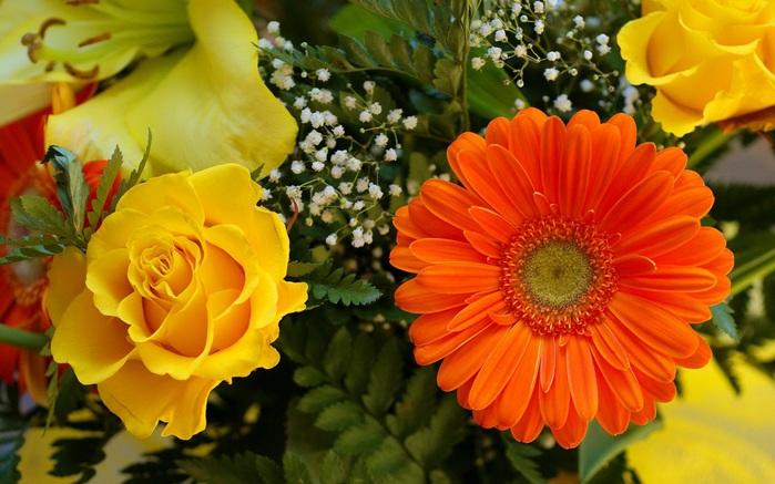 скачать фото качественное крупным планов замезшихтрав цветов