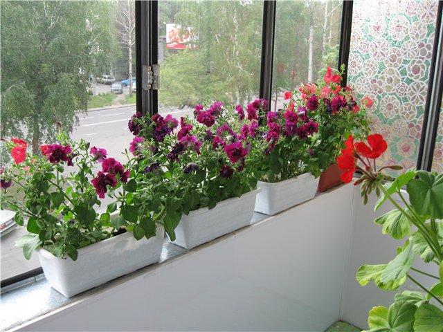 Цветник на балконе как сделать.
