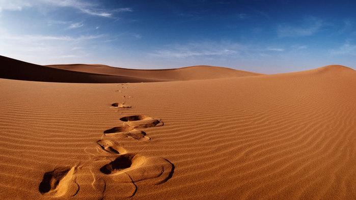 Desert-Tracks-1 (700x393, 55Kb)