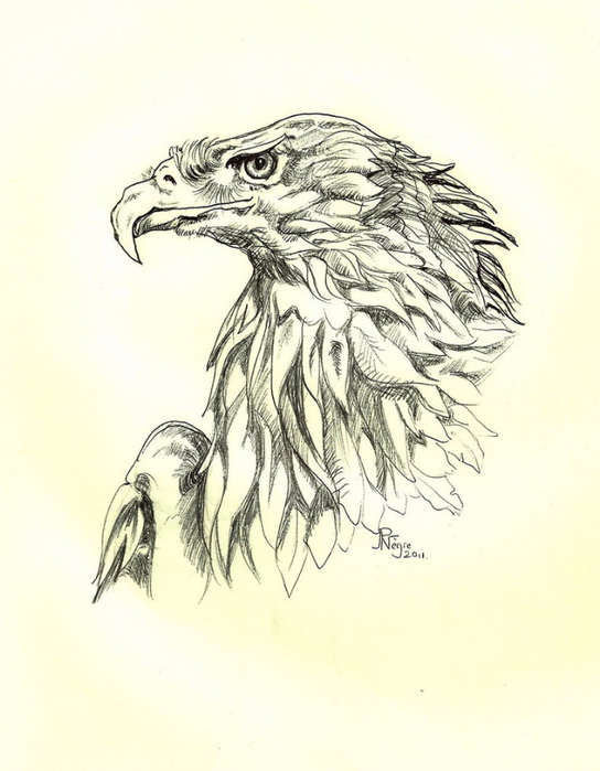 eagle_2_by_stcyr74-d4fsq5d (544x700, 246Kb)
