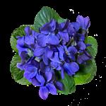 синие (150x150, 33Kb)