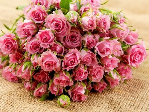 Roses-520x390 (520x390, 88Kb)