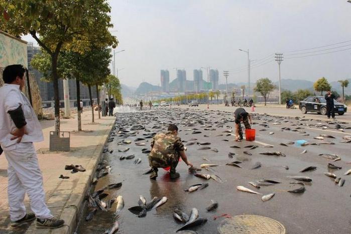 рыба на дороге в китае 1 (700x465, 316Kb)