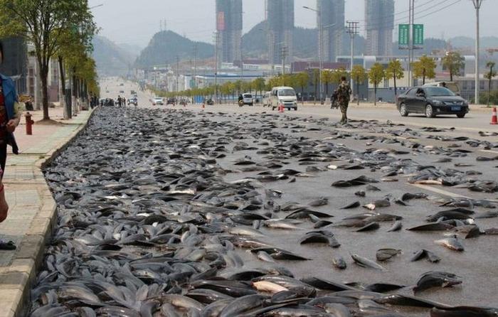 рыба на дороге в китае 3 (700x446, 337Kb)