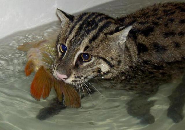 сонник ловить свою кошку