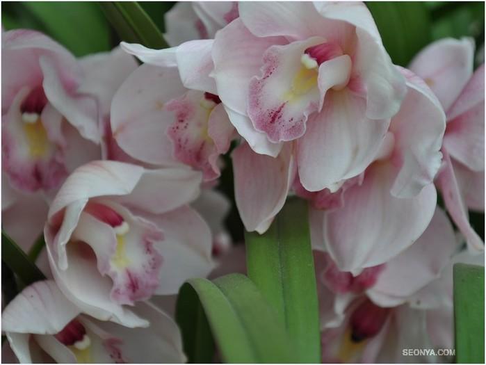 Когда пересаживают орхидею и в какой горшок