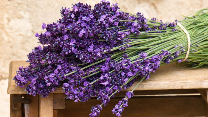 Bouquet-of-purple-lavender-flowers_1920x1080 (700x393, 399Kb)