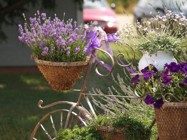 lavender_big (650x487, 347Kb)