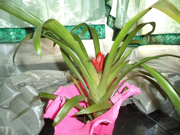 Комнатные длинные цветы 5