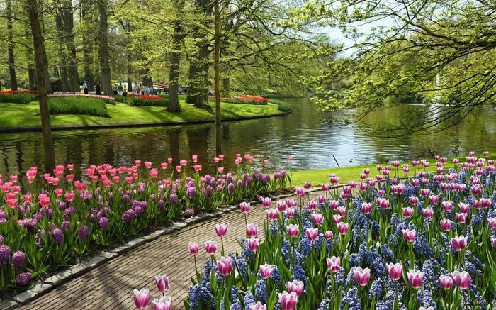 Река цветов