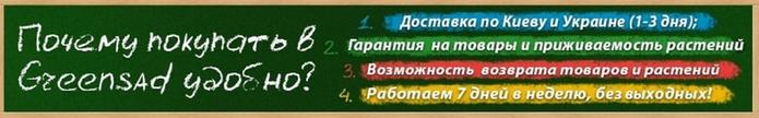 3509984_36 (700x108, 140Kb)
