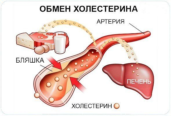 холестерин (590x400, 171Kb)