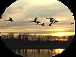 5230261_venetka_ptici1 (150x113, 31Kb)
