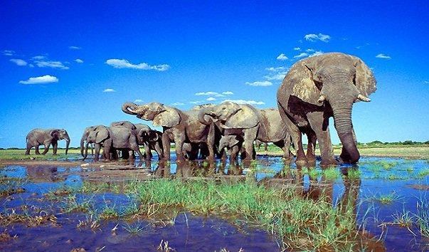 2. Национальный парк Этоша (603x354, 261Kb)